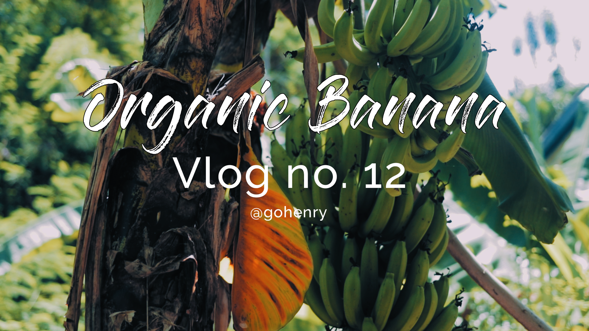 Organic Banana by Henry.png