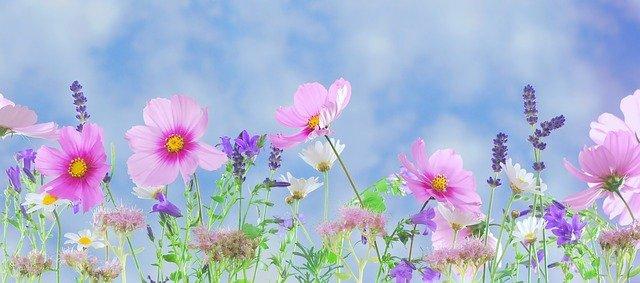 wildflowers571940_640.jpg