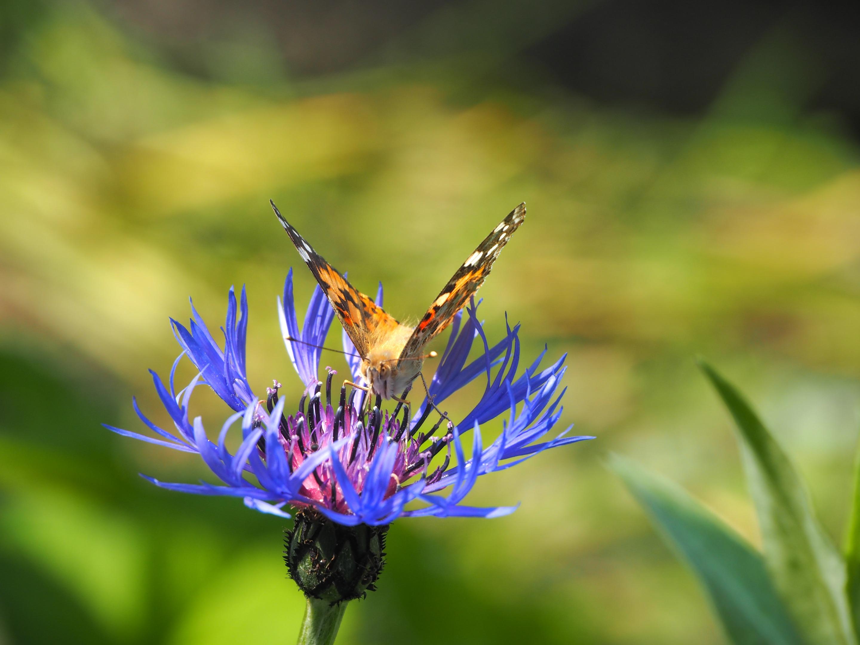 метелик з минулого 2.jpg