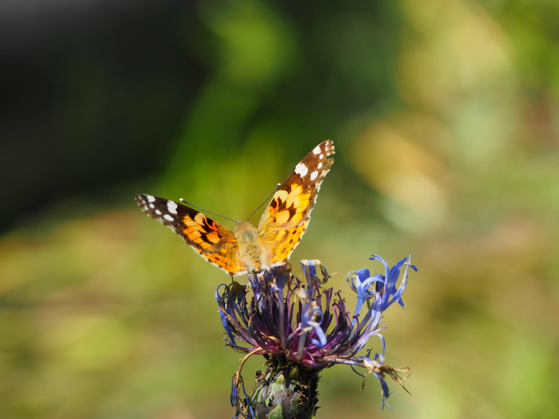 метелик з минулого 3.jpg