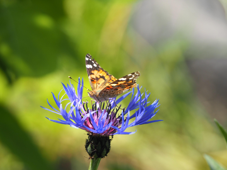 метелик з минулого 1.jpg